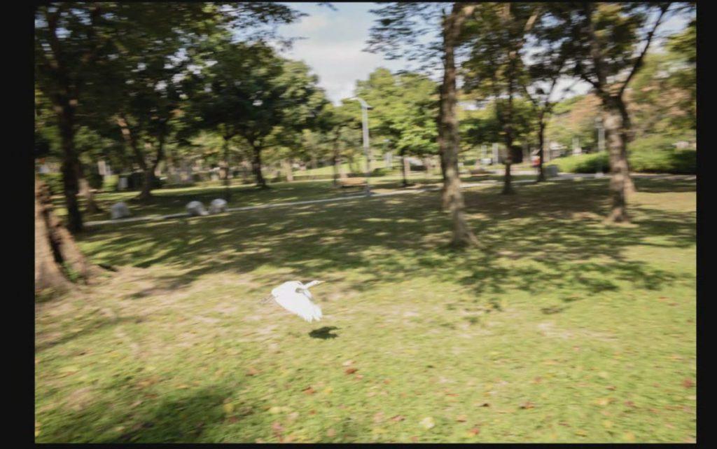 用 Leica 相機也可以拍攝到雀鳥起飛的一瞬