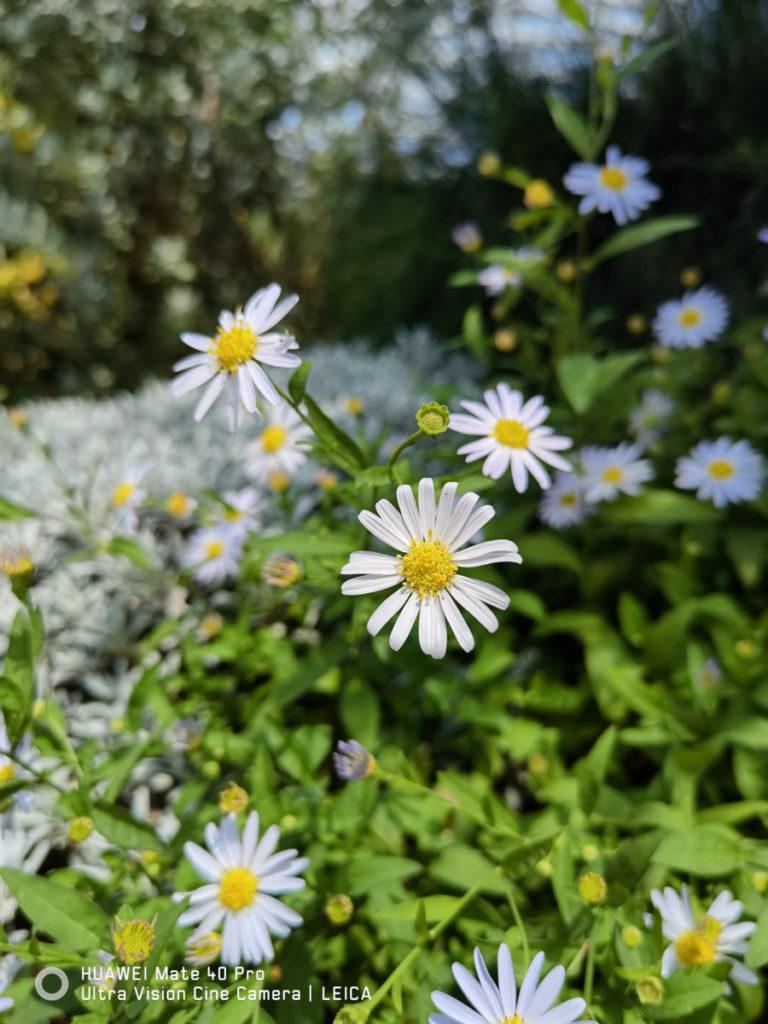 AI 加持辨識出花卉拍攝場景,大光圈效果令相片有足夠的立體感,畫質亦銳利。