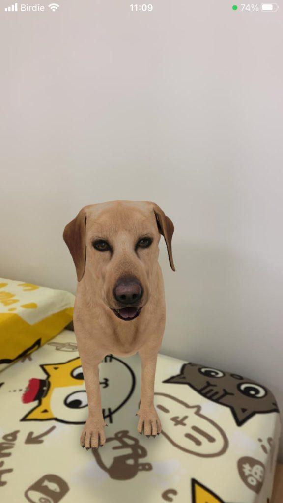 於第二代 iPhone SE 輸入 Labrador retriever ,可使用 Google AR 。