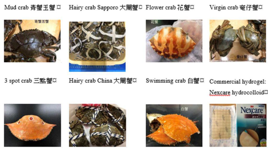 整個實驗測試了十款蟹殼,從而找出最佳效果